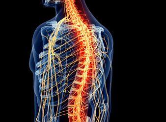 Explication sur la purification du système nerveux:
