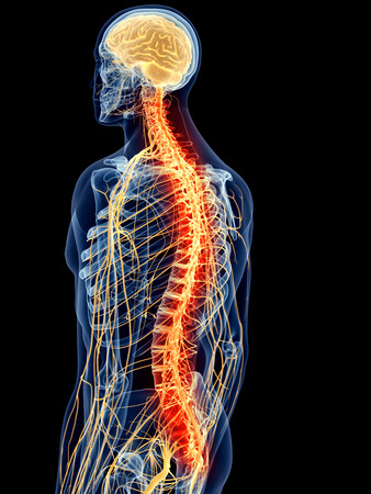 Purification du système nerveux