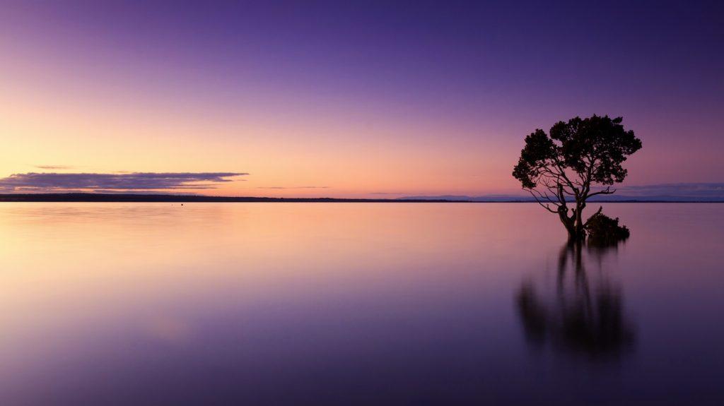 observation tranquille