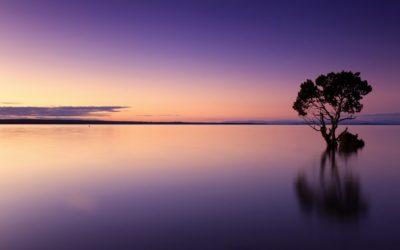 L'observation tranquille